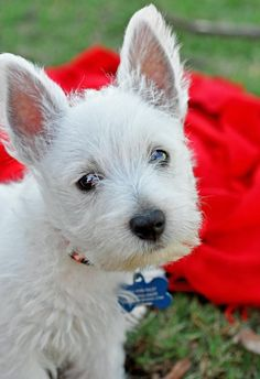 Meet Kevin Bacon - the terrier