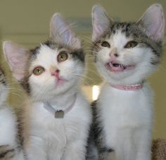 I is the happy one!  LOL!