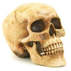 This realistic-looking skull makes a creepy decoration year round! Skull has a reddish hue to it, and looks way better in person! - Weight 0.8 pound - Polyresin - 6.5 x 4.25 x 4.6 inches tall