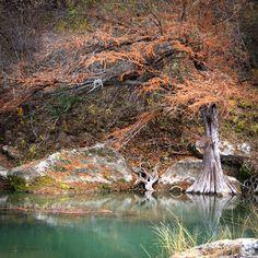 Guadalupe River State Park, Texas by Olya Soloviova, via 500px