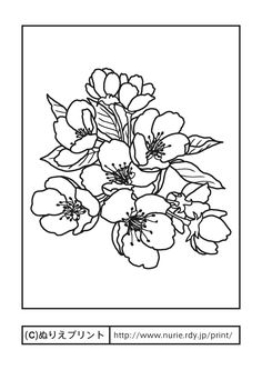二十世紀梨の花(主線・黒)/鳥取県の花/無料塗り絵/都道府県【ぬりえプリント】