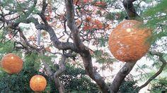 globe lights Jamie Durie, Globe Lights, Landscape Design, Christmas Bulbs, Outdoor Furniture, Holiday Decor, Garden, Home Decor, Garten