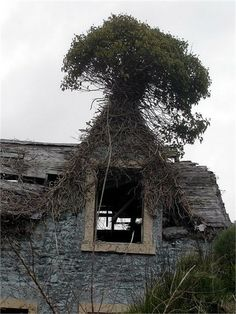 Shrubbery on an abandoned house