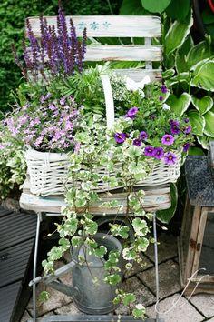 Weißer Korb mit Steppensalbei, Lobelien, Gundelrebe und Mini-Petunien auf Shabby Gartenstuhl. Lila Traum! Sieht toll aus.