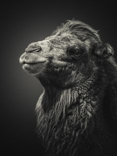King of the Desert  by Shay Wax on 500px