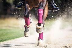 9 Übungen für einen besseren Galopp | Pferderevue | Ausbildung