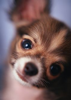 look at that face! So adorable....