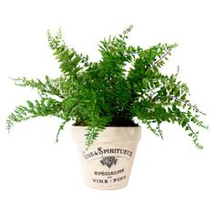 Create a lush tablescape or charming vignette with this lovely faux fern, nestled in a clay planter showcasing a French typographic motif.  ...