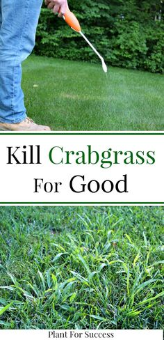 lawn and garden Crabgrass removal and crabgrass control is important to achieve a uniform, green lawn. Check out this custom lawn care strategy to prevent crabgrass for good. Lawn Care Schedule, Lawn Care Tips, Fall Lawn Care, Pool Garden, Lawn And Garden, Herbs Garden, Shade Garden, Vegetable Garden, Lawn Care Business Cards