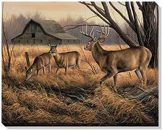 prints of deer images | Whitetail Deer Wrapped Canvas; Millette | Wild Wings