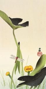 'Dragonfly and Lotus' ( Meiji era, ca. Woodblock print by Ohara Koson 小原古邨 - Published by Daikokuya. Image and text courtesy Freer Sackler Japanese Art Copyright with museum Japanese Artwork, Japanese Painting, Japanese Prints, Chinese Painting, Japan Illustration, Botanical Illustration, Ohara Koson, Illustration Botanique, Art Asiatique