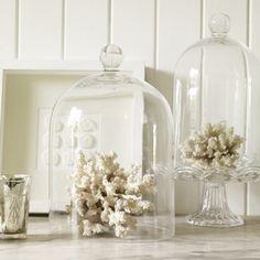 Glass cloche with white coral.