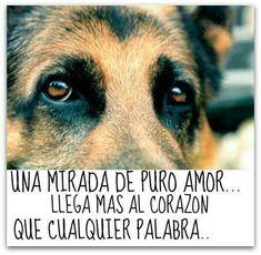 """""""Una Mirada de Puro Amor llega más al Corazón que cualquier Palabra"""" <3"""