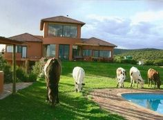Perfect guesthouse opportunity with remarkable setting. Huge Mediterranean house with swimming pool. Ideal for an energetic couple seeking income and a great lifestyle. Vacant Land, Mediterranean Homes, Real Estate Agency, Townhouse, Property For Sale, Swimming Pools, South Africa, Opportunity, Couple