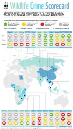 Info graph on wildlife score card for how well countries are protecting tigers, elephants, and rhinos.