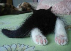Awww...lol....Sooo Cute!! <3