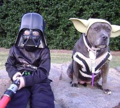 Because Star Wars and Pit Bulls are rad.