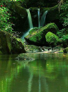Rain Forest México