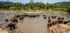 Voyage Sri Lanka sur mesure - Séjour Sri Lanka   Austral Lagons
