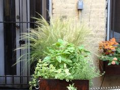 East Village Modern - contemporary - landscape - new york - by Little Miracles Designs
