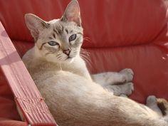 #Cats, #Gatos Croqueta
