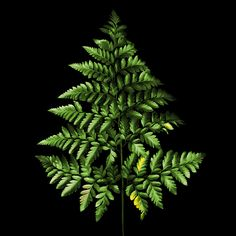 Фотография  FERN TREE... автор Magda Indigo на 500px