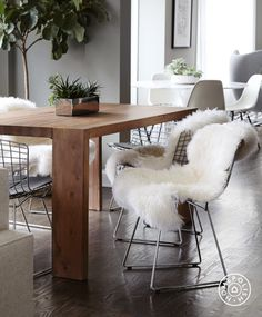 Chic and Modern in Chicago - The organic wood Blox Dining Table from CB2 compliments the vintage Bertoia chairs – and you really can't go wrong with a well-draped sheepskin.