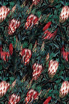 Protea Floral Night Pattern by Burcu Korkmazyurek