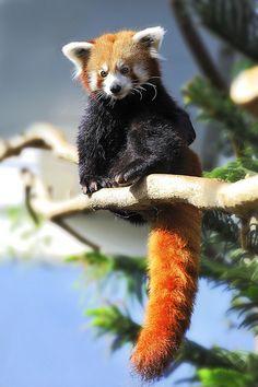 animal cool news !!!