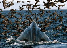 #Humpback #whale www.flowcheck.es Taller de equipos de buceo #buceo #scuba #dive