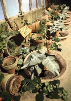 herbology table #hp