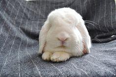 I miss my bunny!!