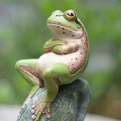 Chilling frog