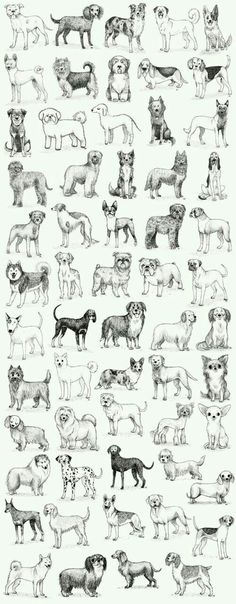 puppies for sale near me 2018 free ~ puppies for sale near me free . puppies for sale near me free 2020 . puppies for sale near me 2018 free Animal Sketches, Animal Drawings, Art Drawings, Dog Sketches, Dog Illustration, Illustrations, Dog Wallpaper, Pattern Wallpaper, Dog Paintings