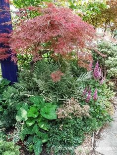 15 Stunning Perennial Ground Cover Plants That Thrive in the Shade - Gardening @ From House To Home I LOVE these perennial ground cover plants that love the shade. There are so many pretty flowers for my shade garden, I can't decide which ones to get! Perennials Fabric, Full Sun Perennials, Shade Perennials, Flowers Perennials, Perennial Ground Cover, Ground Cover Plants, Dwarf Plants, Tall Plants, Ground Orchids