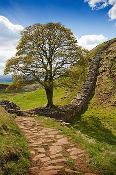 "This one's Hadrian's Wall. I have walked the length of it, however if you have never done the walk you should still recognise this Tree. I'll give you a clue, it appeared in Robin Hood ""Prince of Thieves"" Places Around The World, The Places Youll Go, Places To See, Around The Worlds, Roman Britain, English Countryside, Lake District, Belle Photo, Beautiful Landscapes"