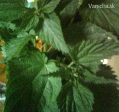 žihľavové recepty 2 Edible Flowers, Medicinal Herbs, Korn, Herb Garden, Plant Leaves, Shampoo, Food And Drink, Health Fitness, Homemade