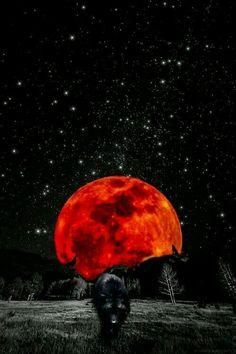 Red Moon a risen. Iphone Wallpaper Sky, Wolf Wallpaper, Cute Wallpaper Backgrounds, Wallpapers, Beautiful Wolves, Beautiful Moon, Wallpaper Lobos, Wolf Artwork, Shoot The Moon