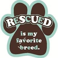 Rescue a shelter animal and he will rescue you.