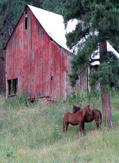 ~old red Barn, horses