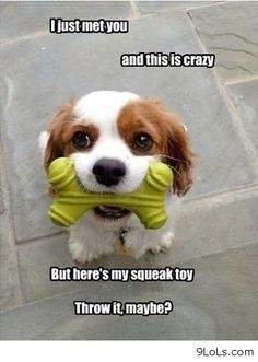 dogs cant live without their toy