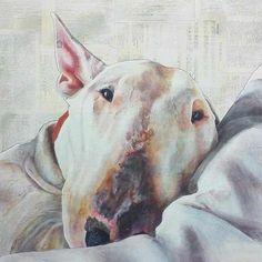 Dog Portraits by Tom Buckley Brindle Bull Terrier, Fox Terrier, Bull Tattoos, Dog Suit, Loyal Dogs, Bully Dog, English Bull Terriers, Dog Illustration, Comic