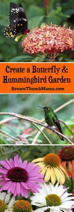 Home gardening tips water garden design,pretty container gardens food garden plants,home food garden how to design a small vegetable garden. Furniture Top View, Belle Plante, Hummingbird Garden, Hummingbird Nectar, Hummingbird Flowers, Hummingbird Food, Organic Gardening Tips, Vegetable Gardening, Hydroponic Gardening