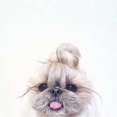 Top knot pup//