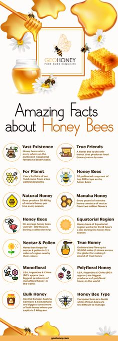 Discover the amazing facts of honey bees. We are sharing an infographic and their wonderful facts here. Read now and get more information about honey bees. Honey Bee Facts, Facts About Honey Bees, Bee Quotes, Types Of Bees, Natural Honey, Raw Honey, Bee Free, Honey Bee Hives, Honey Benefits