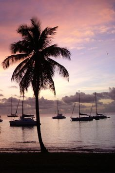 #Mustique #Wallpaper #Flickr #Sea Palm trees, Image, Photograph, Summer - Follow @extremegentleman for more pics like this!