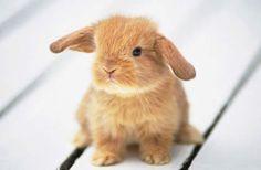 hangoor konijntje         schattig!