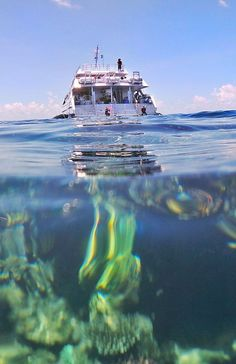 Snorkeling the Great Barrier Reef involves jumping off the back of the boat or pontoon into deep water. Time In Australia, Australia Travel, Queensland Australia, Great Barrier Reef Snorkeling, City Of Adelaide, Airlie Beach, Maui Vacation, Big Island Hawaii, Snorkelling