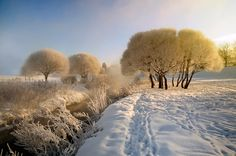 Frosted trees  |  35PHOTO - Гордеев Эдуард