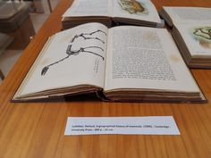 A geographical history of mammals.- 400 p. Mamiferos I. Cambridge University, Mammals, History, Vertebrates, Exhibitions, Historia